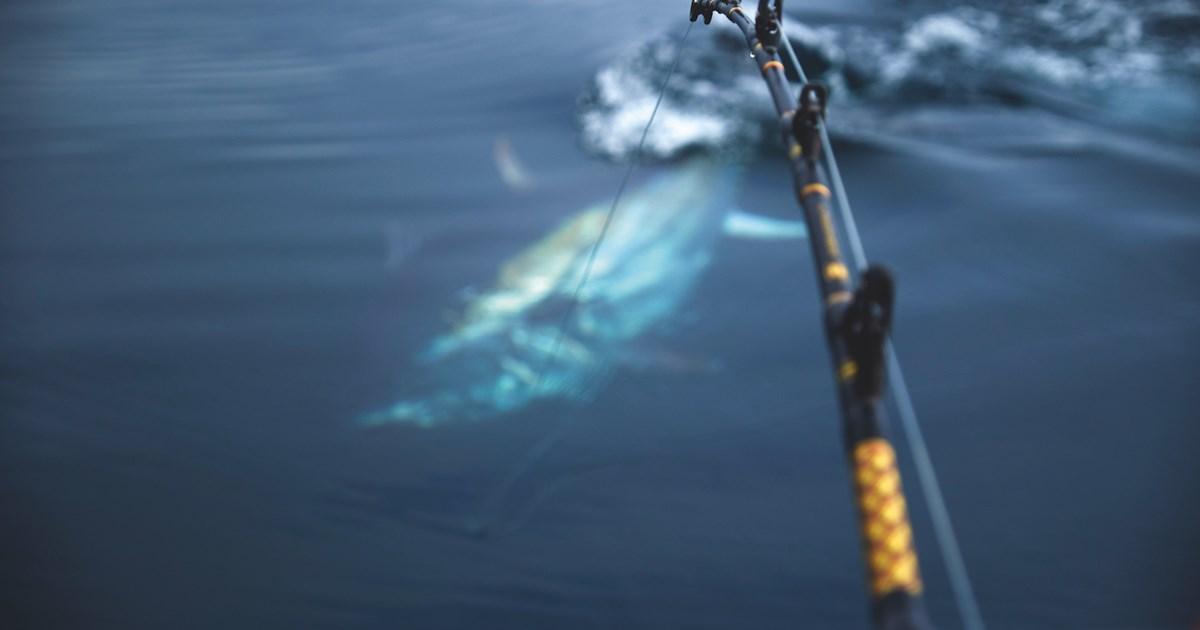 www.sportsfiskeren.dk