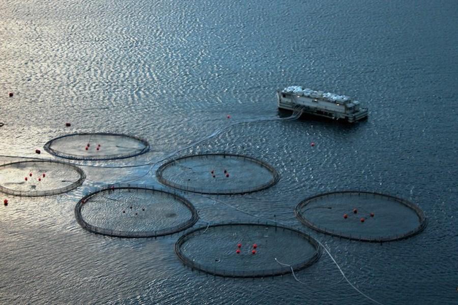 Færøsk_havbrug_web.jpg