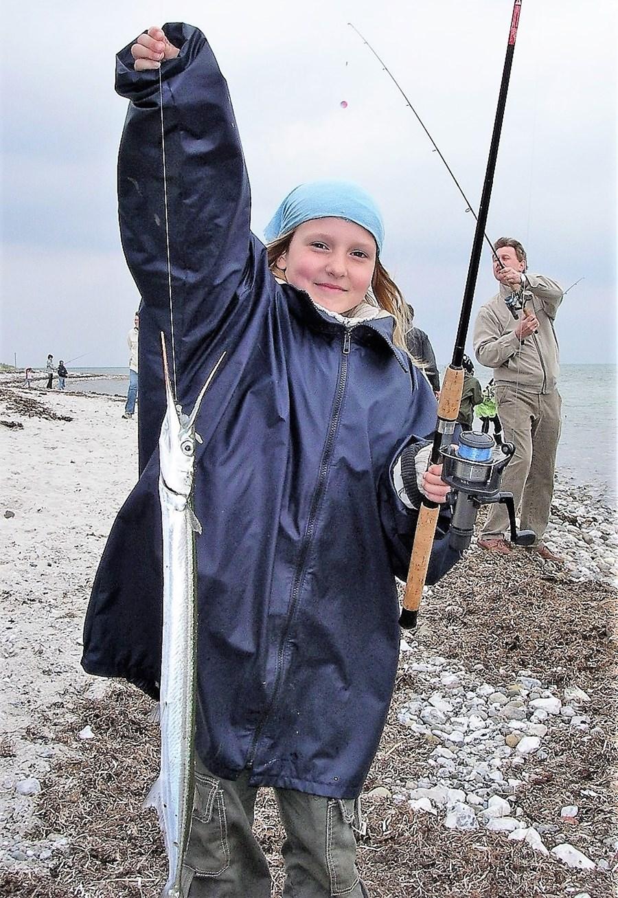 børn unge hornfisk 8.jpg