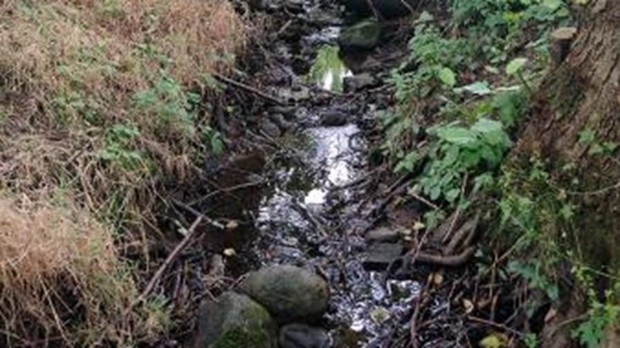 Billed 2, tilløbet til Hulebækken løber i skoven.JPG