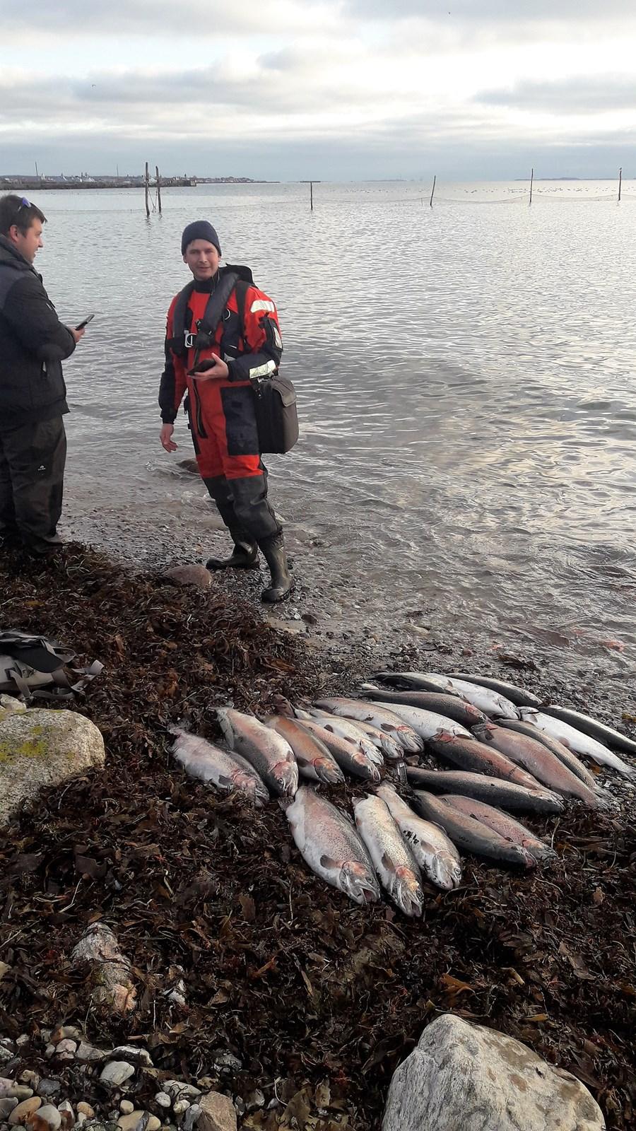 Billed, Fiskerikontrollen på besøg under det vilde fiskeri.jpg