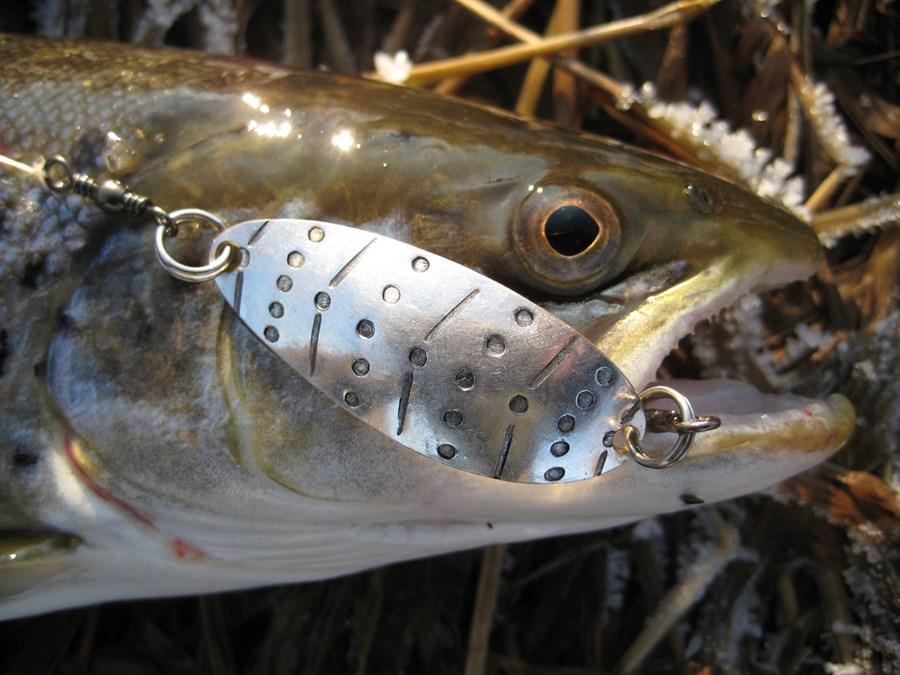 FISHING 24.01.2012 040 Trend