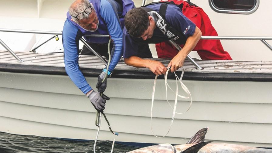 Tuna - photo Markus Lundgren.jpeg