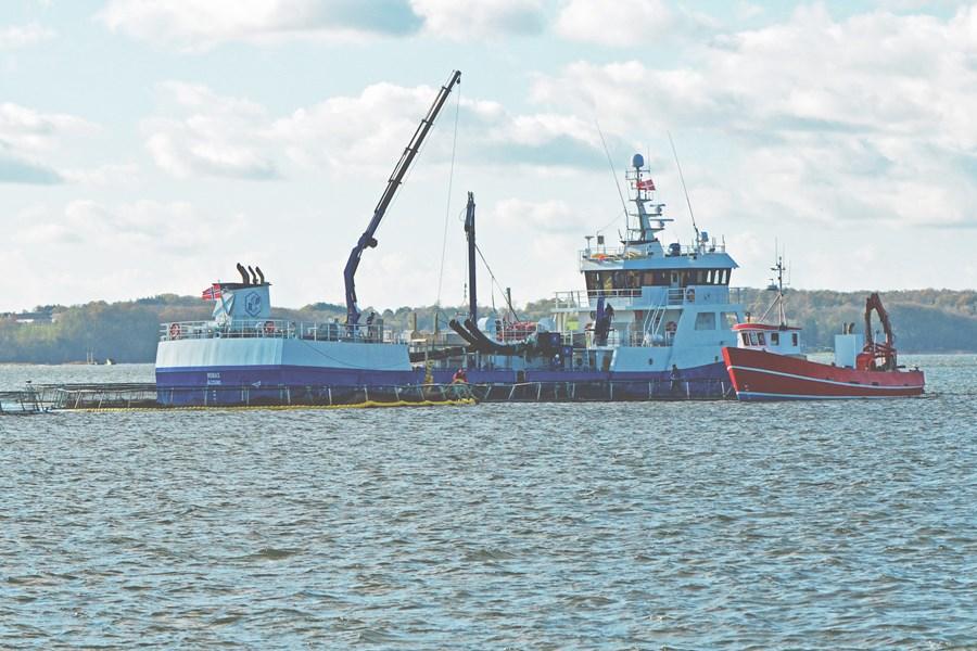 Norsk brøndbåd støvsuger fisk op fra SFS's Børup Sande Havbrug Foto KKFE.jpg