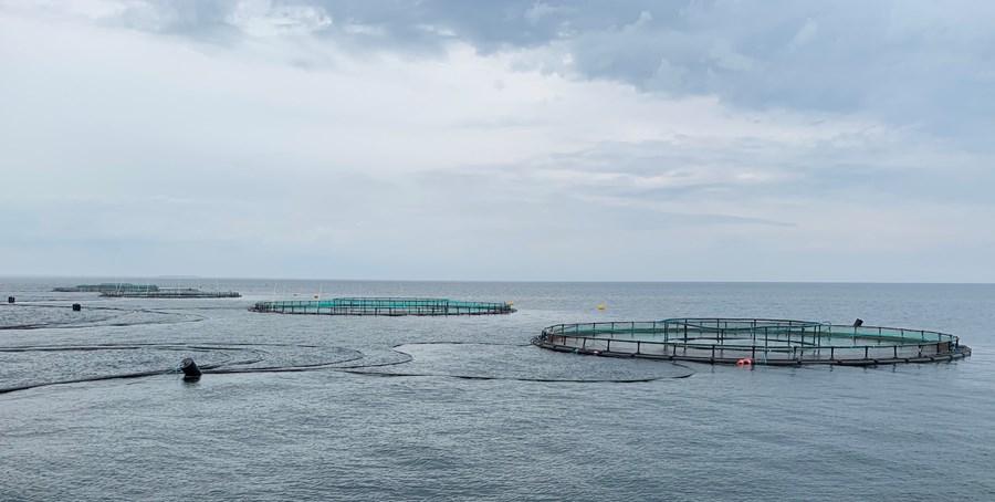 Havbrug Kontrol Tilladelser
