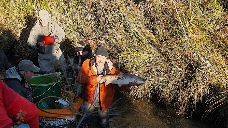 Billed 4, der blev fanget og flyttet flotte fisk.JPG