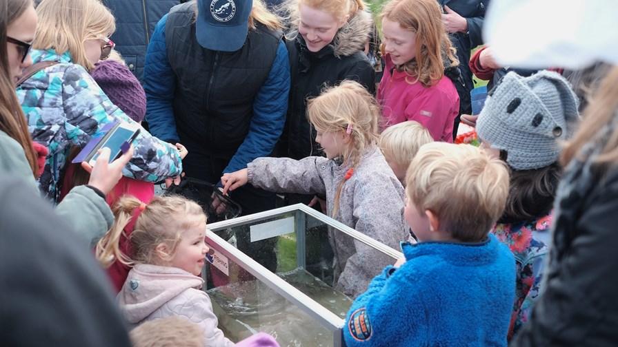 Billed 2, Linda Bollerup Høgh fra Fyns Laksefisk hjælper til ved akvarierne, så alle kan se de små ørreder tæt på.JPG