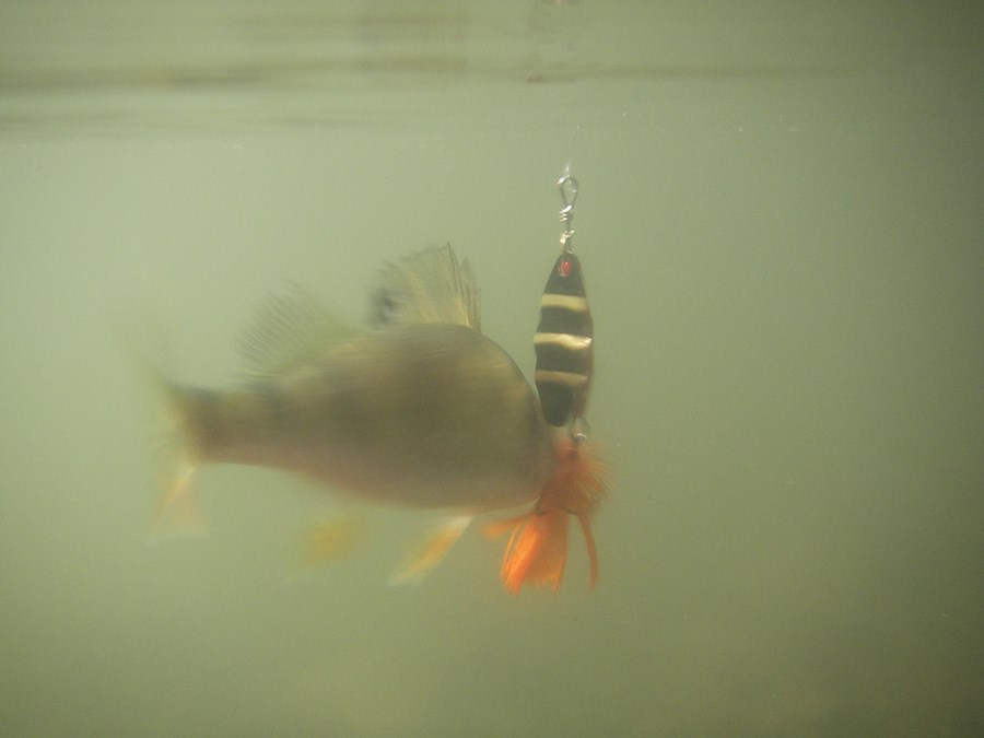 fiskekonkurrence_haderslev_2.jpg