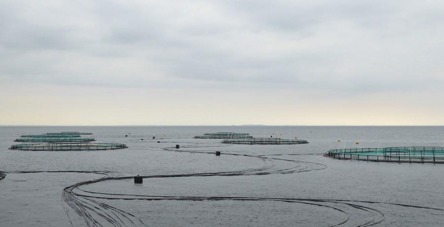 havbrug_placeringstilladelser.jpg