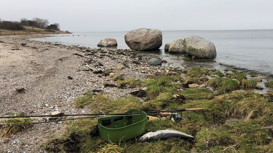 Isefjorden Grønlandshuse Havørred