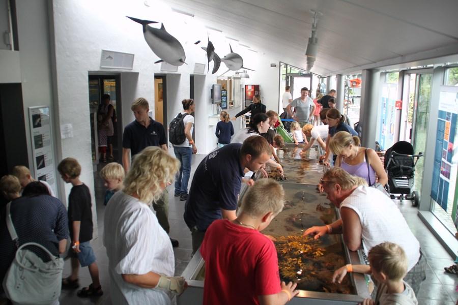 Publikum i akvariet 2011 (1).JPG