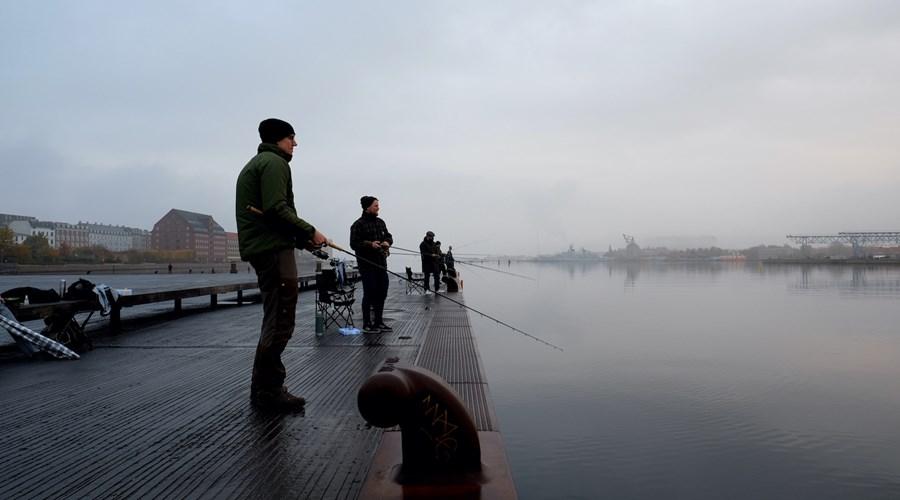 Fiskeri I København Havn