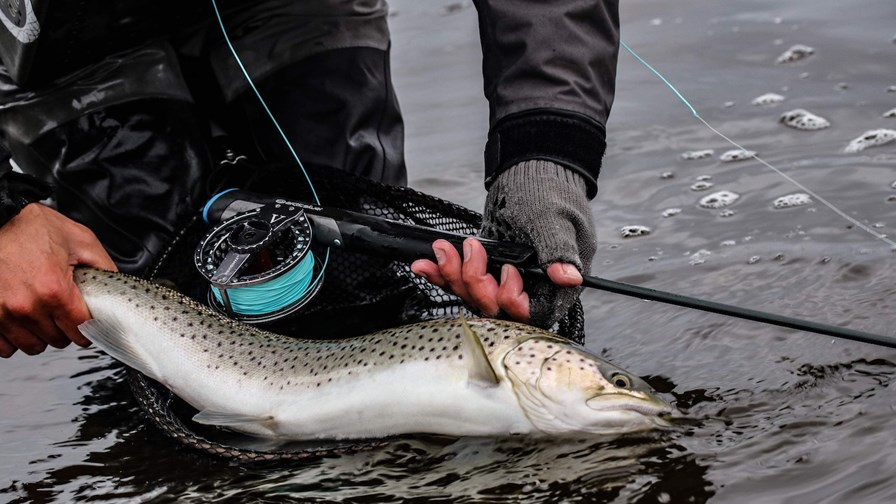 Sea Trout From The Limfjord[1]