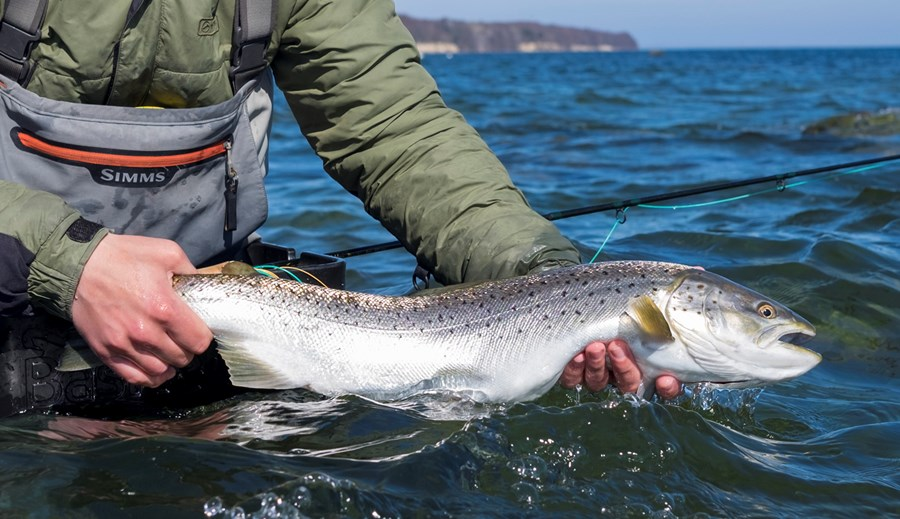 Kystfiskeri Sjælland Havørred 1