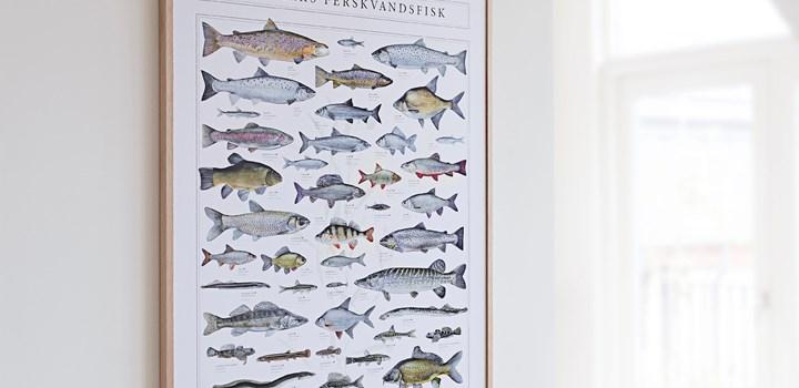 Fiskeplakat_Ferskvandsfisk-kopi.jpg