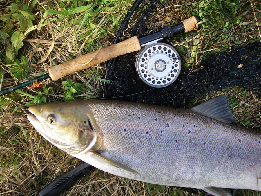 salmon 103 Kopie.JPG