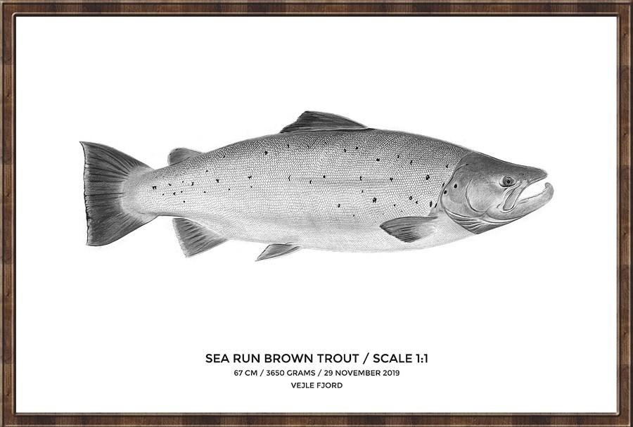 My Fish Poster Havørred