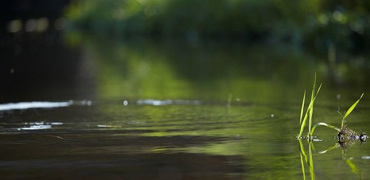 2014.05.20.Danmarks Sportsfiskerforbund123670.jpg