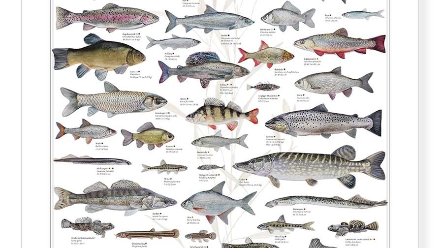 Fiskeplakat_ferskvand.jpg