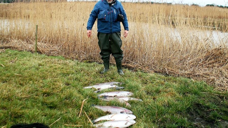 Billed 2, Lars Høpfner gjorde sit til at opfiske så mange regnbueørreder som muligt under premieren.JPG