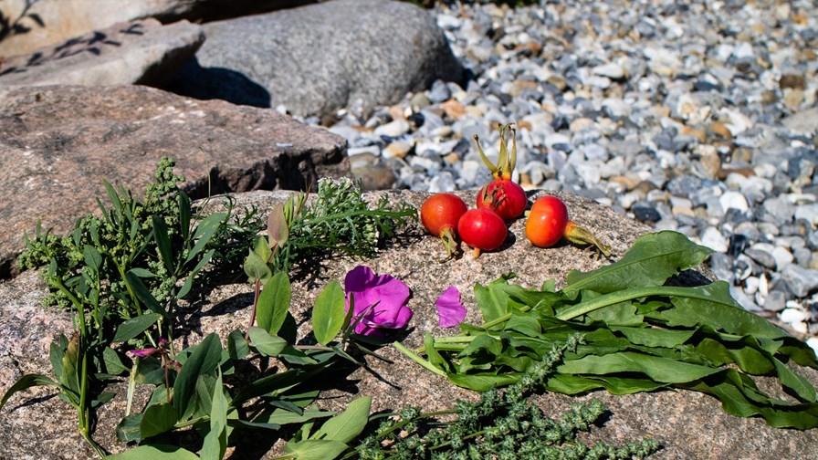 Foto 3_Vilde planter_fotograf Tina Andersen.jpg