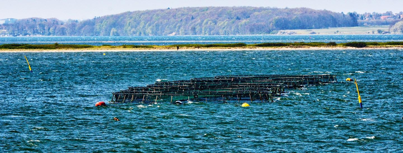 SFS's havbrug Borre I Foto KKFE.jpg